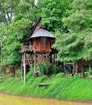 บ้านทาร์ซาน สวนป่าแม่แจ่ม